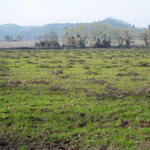Vendo terrenos urbanos en Rengo