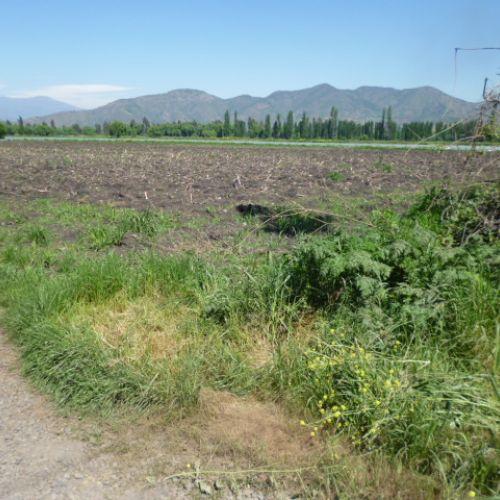 Terreno de 5000m2  Rengo a Quinta de Tilcoco