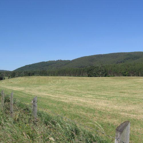 PAILLACO, 215 has , magnifico campo ganadero, forestal.